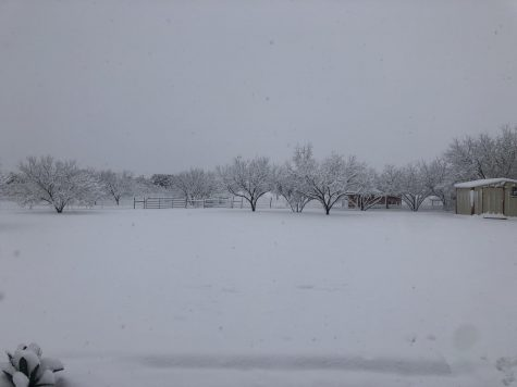 Texas Snow Day!